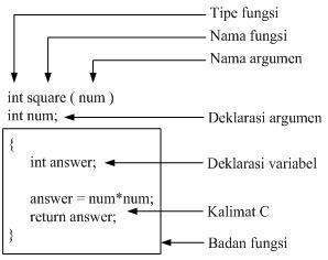 anatomi fungsi